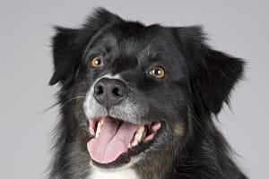 alimento hipoalergénico para perros